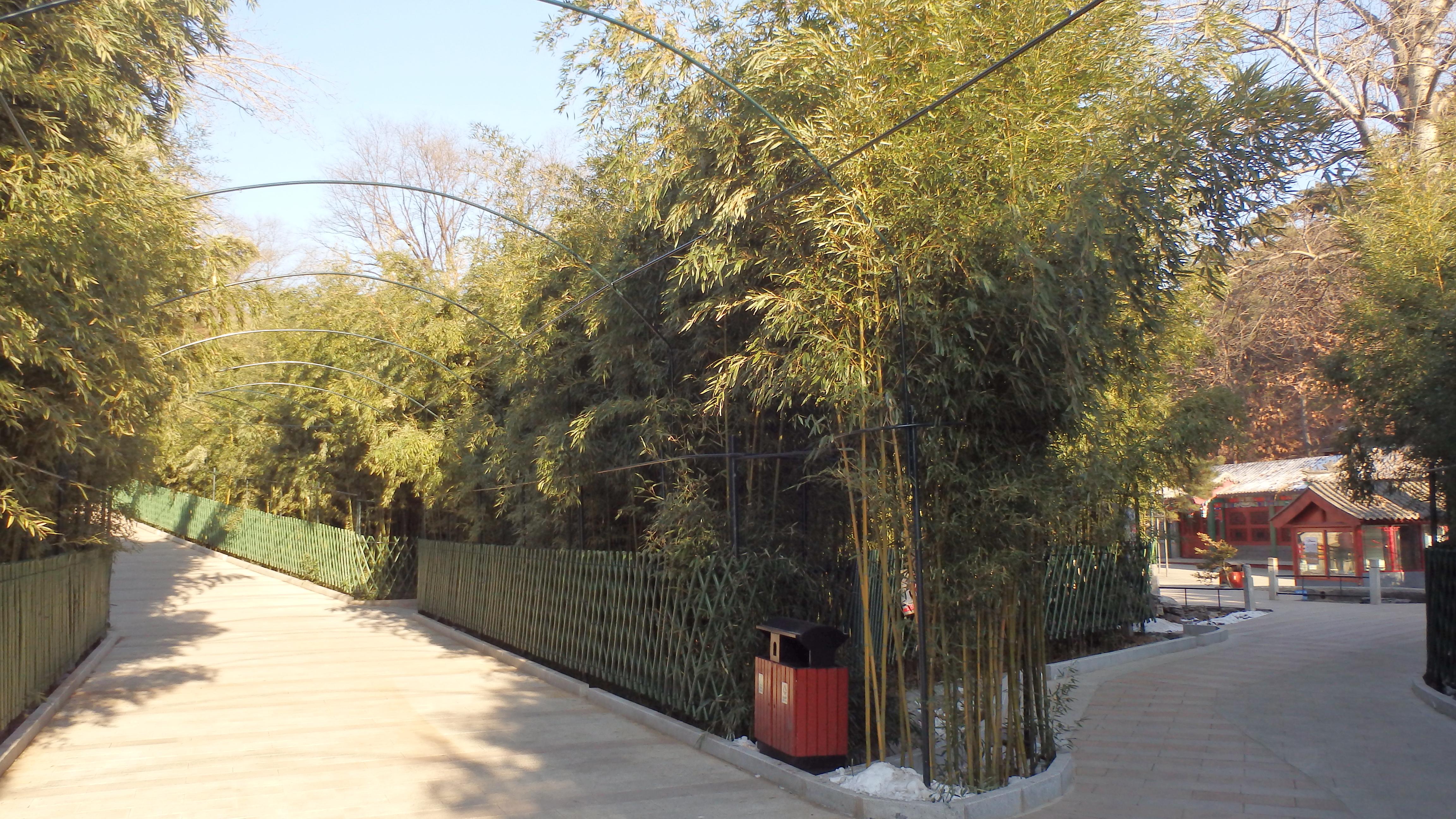 Красивая бамбуковая роща в Хунло-сы и дорожки