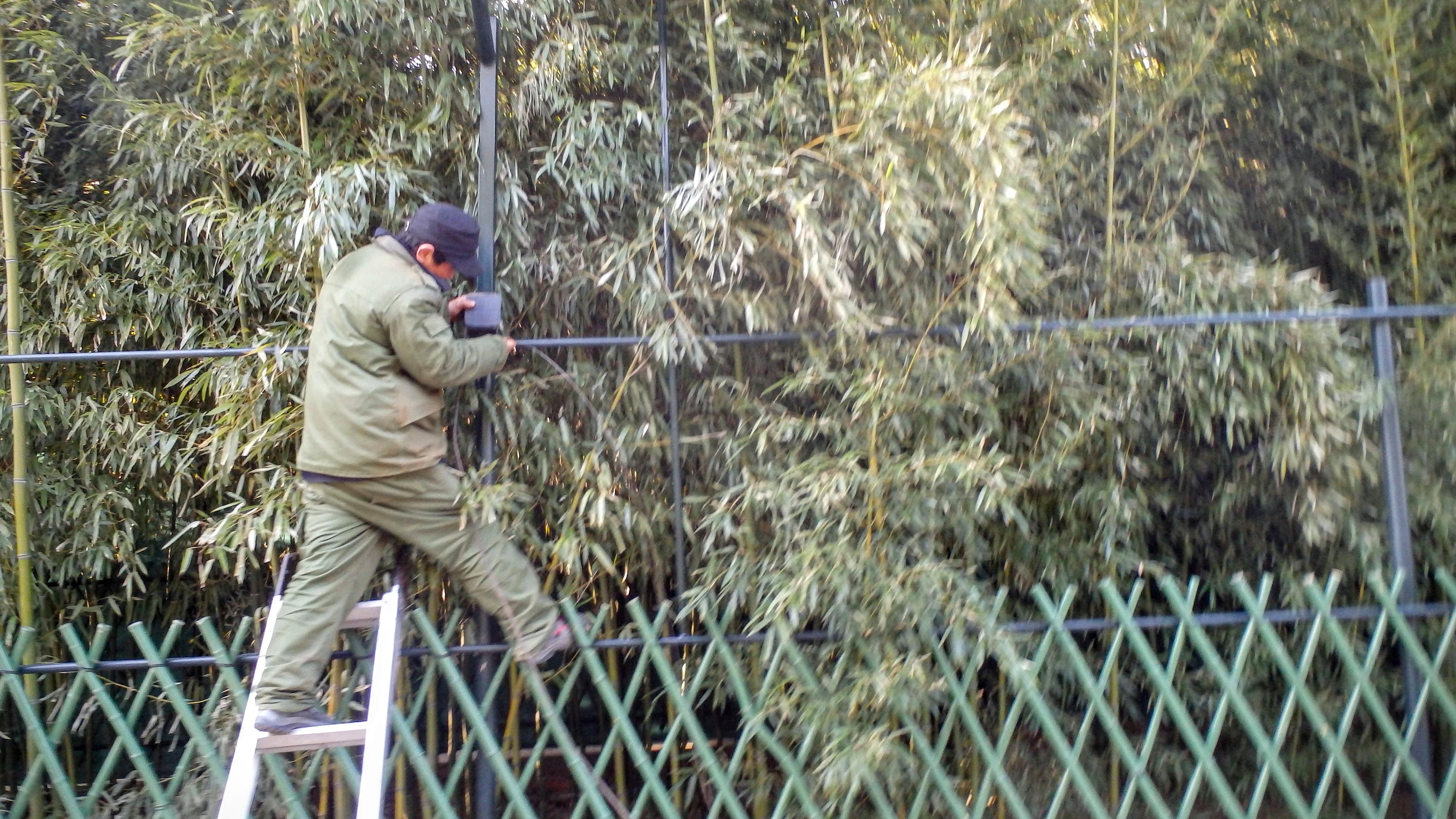 Хунло-Сы: мужик, бамбук. Страха нет!